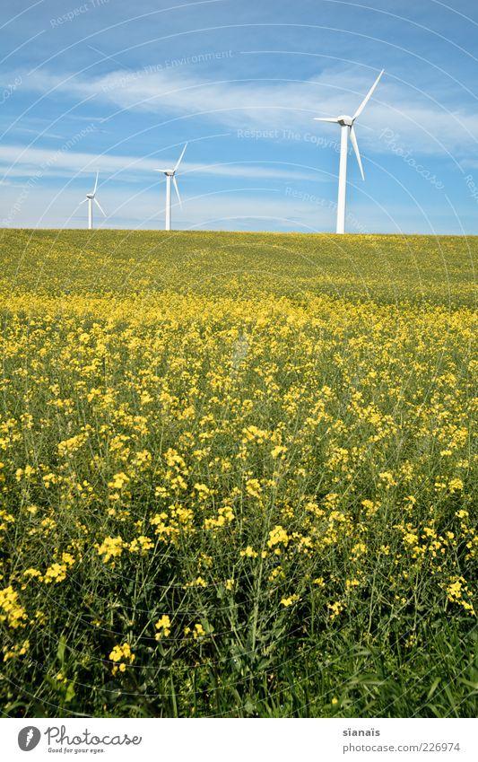alternativ? Energiewirtschaft Erneuerbare Energie Windkraftanlage Umwelt Natur Landschaft Himmel Sommer Schönes Wetter Nutzpflanze Feld gelb Klima Umweltschutz
