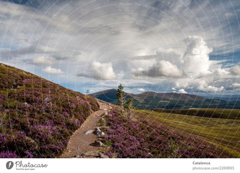 Abbiegen Ferien & Urlaub & Reisen Sommer wandern Landschaft Wolken Horizont Pflanze Gras Sträucher Moos Blatt Blüte Bergheide Hügel Berge u. Gebirge Moor Sumpf