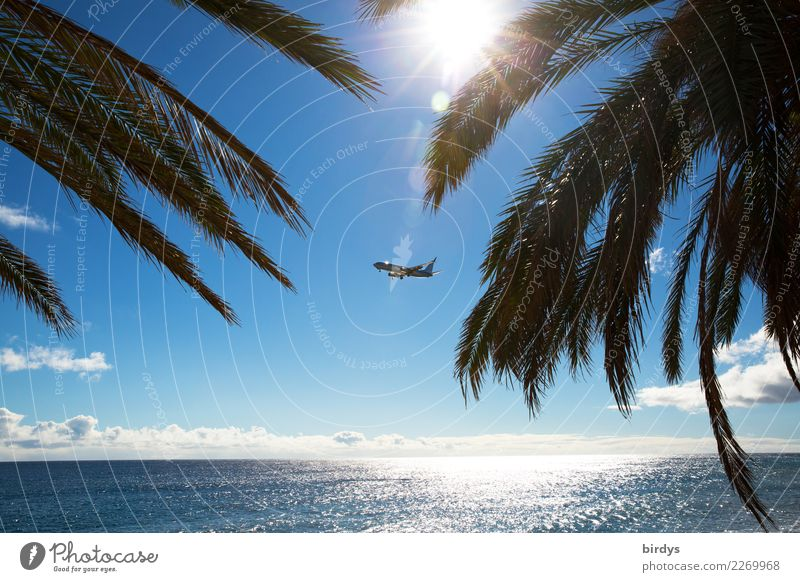 Urlaubsflieger exotisch Ferien & Urlaub & Reisen Tourismus Ferne Sommerurlaub Sonne Meer Wolkenloser Himmel Sonnenlicht Schönes Wetter Palme Palmenwedel