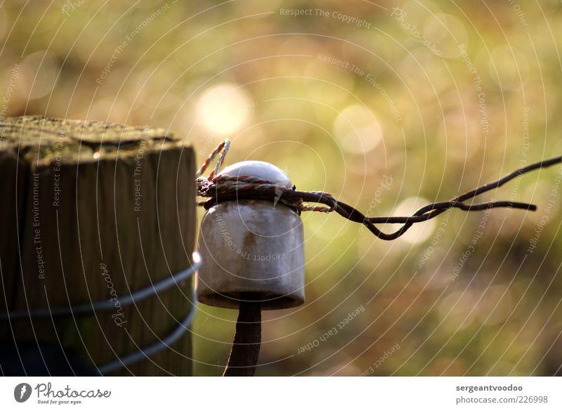 Like a bird on a wire... Natur grün ruhig Farbe Erholung Leben Freiheit Gefühle Holz träumen Stimmung Zufriedenheit Energie frei Sicherheit Warmherzigkeit