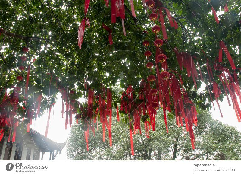 Rote Glücksbringer hängen von einem Baum in einem Tempel in China Farbfoto Asien Buddhismus Religion & Glaube Außenaufnahme Kultur Tourismus rot Bänder