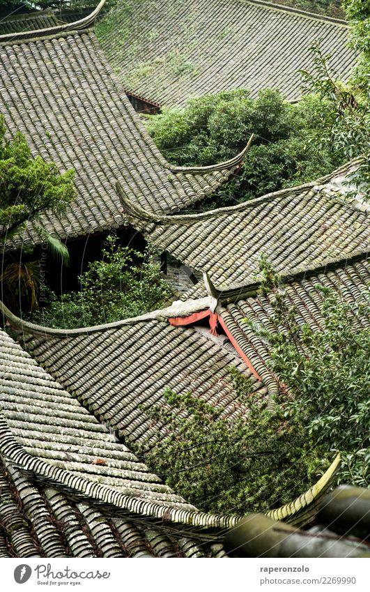 dach, dächer, am dachsten Ferien & Urlaub & Reisen grün Erholung Blatt ruhig Architektur Tourismus grau wandern verrückt einfach Schutz Dach Sicherheit Bauwerk
