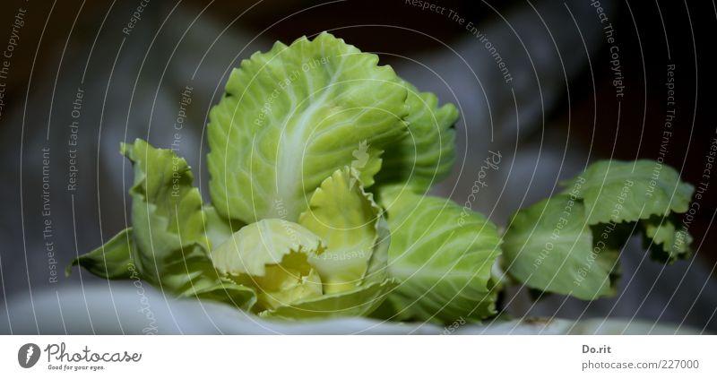 Kohl für 200.000 Lebensmittel Gemüse Ernährung Mittagessen Abendessen Picknick Diät Sinnesorgane Blatt grün hellgrün Blattadern lecker Farbfoto Gedeckte Farben