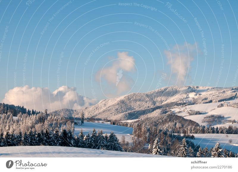 Schwarzwald, gepudert Umwelt Natur Landschaft Pflanze Himmel Wolken Sonnenaufgang Sonnenuntergang Winter Schönes Wetter Eis Frost Schnee Baum Hügel