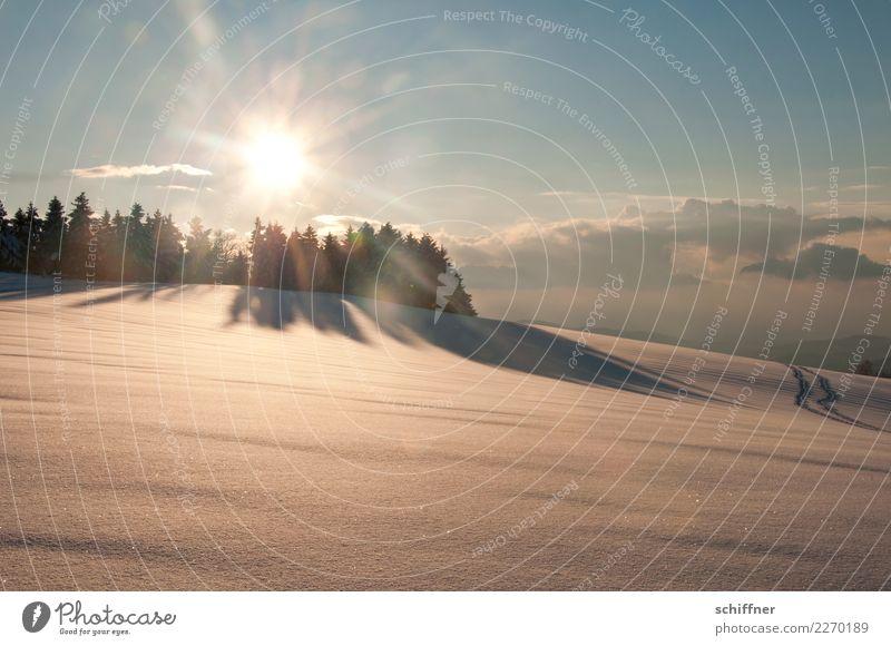 Am Ende des Tages Umwelt Natur Landschaft Himmel Wolken Sonne Sonnenaufgang Sonnenuntergang Sonnenlicht Winter Schönes Wetter Eis Frost Schnee Baum Hügel