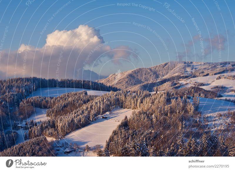 Rosa Puderzucker Umwelt Natur Landschaft Himmel Wolken Winter Schönes Wetter Eis Frost Schnee Pflanze Baum Wald Hügel Berge u. Gebirge Schneebedeckte Gipfel