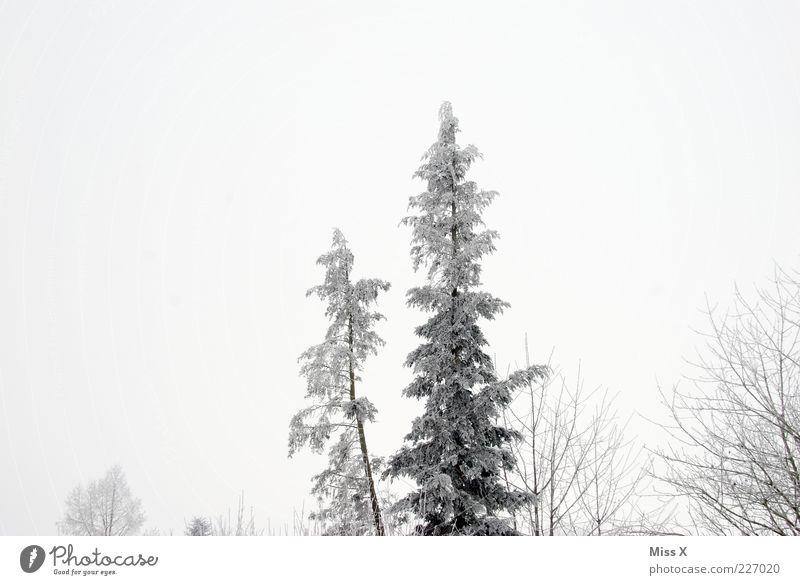 Winterwald schlechtes Wetter Nebel Eis Frost Schnee Baum Wald kalt grau weiß Tanne Schwarzweißfoto Außenaufnahme Menschenleer Textfreiraum oben Morgendämmerung