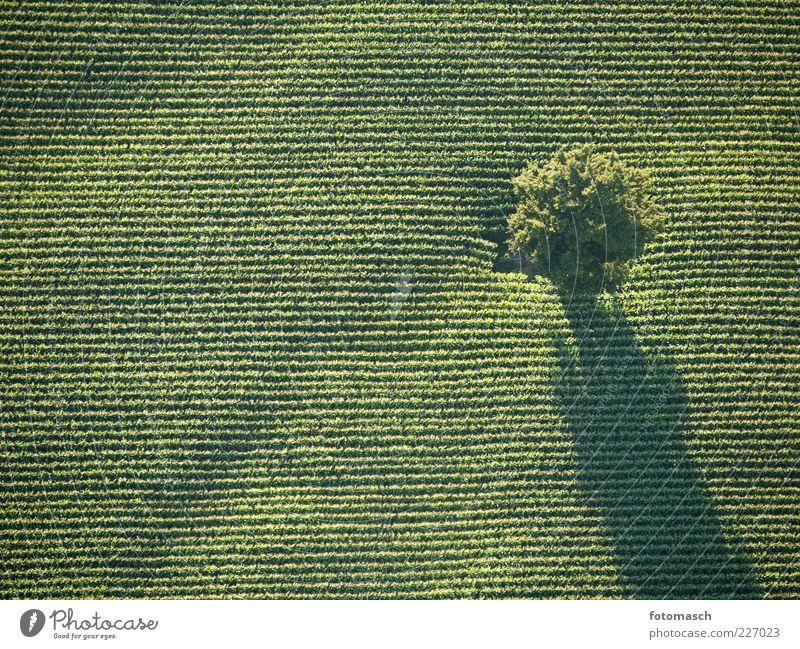 Baum von oben Natur schön Baum Pflanze Sommer Landschaft Linie Zufriedenheit Feld Niveau Schönes Wetter Textfreiraum Luftaufnahme gerade Wetter Vogelperspektive