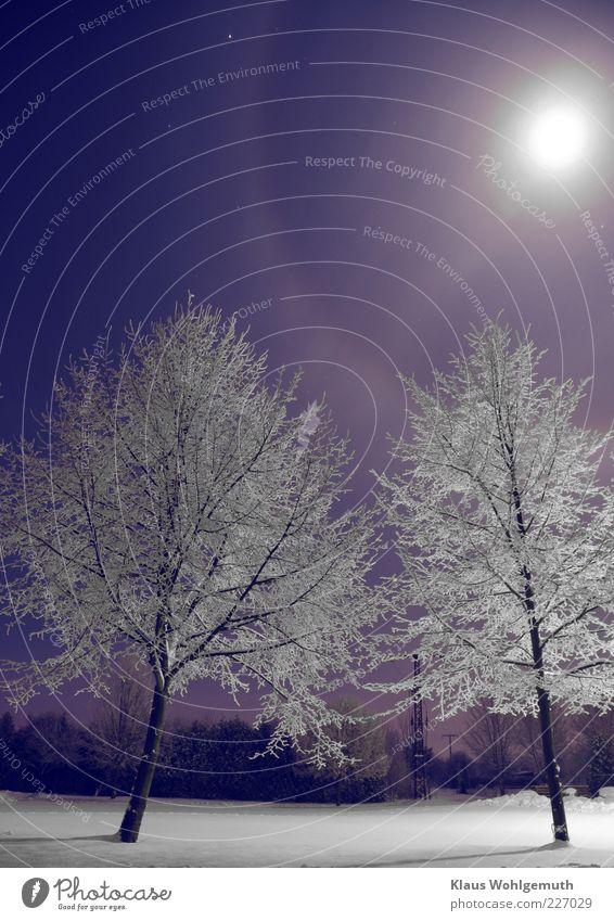 Der Mond hat einen Hof blau weiß Baum Winter kalt Schnee Stern Frost leuchten silber Nachthimmel Dunst kahl Eiskristall Raureif