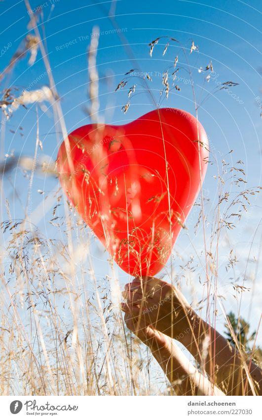 Barbara, schau mal !! Arme Hand 1 Mensch Schönes Wetter Gras Luftballon Herz blau rot Gefühle Stimmung Freude Glück Fröhlichkeit Lebensfreude Sympathie Frieden