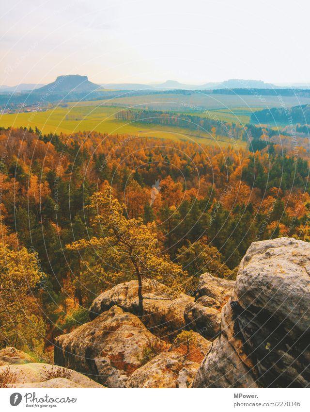 sachsenberge Umwelt Natur Landschaft Schönes Wetter Pflanze Baum Feld Wald Hügel Berge u. Gebirge Erholung Herbst Sächsische Schweiz Aussicht wandern Mischwald