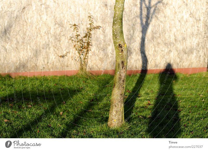 Paradies ende. Umwelt Natur Baum Gras Mauer Wand Traurigkeit Enttäuschung Einsamkeit Farbfoto Außenaufnahme Textfreiraum links Tag Schatten Kontrast Silhouette
