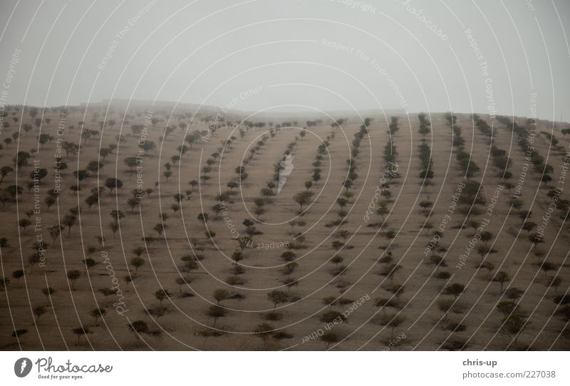 Bäume in Reih und Glied Natur Baum Pflanze Wolken Wald kalt Umwelt Landschaft Sand Feld Nebel Klima trist Urelemente Hügel Wüste