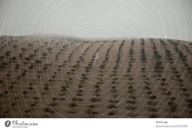 Bäume in Reih und Glied Umwelt Natur Landschaft Pflanze Urelemente Sand Wolken Klima schlechtes Wetter Nebel Baum Nutzpflanze Feld Wald Hügel Wüste kalt trist