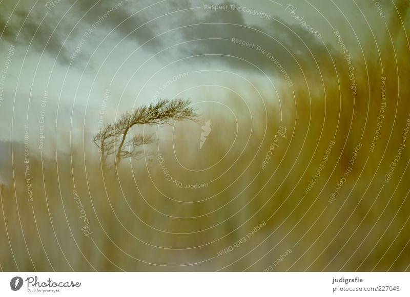 Weststrand Umwelt Natur Landschaft Pflanze Himmel Wolken Baum Gras Küste Ostsee natürlich wild Stimmung Windflüchter Farbfoto Gedeckte Farben Außenaufnahme