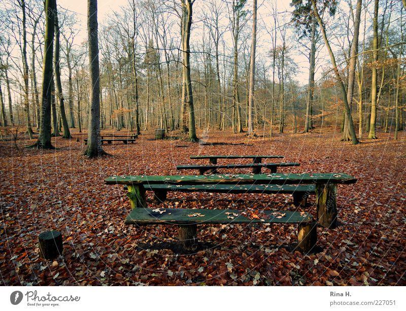Einladung zum Picknick Umwelt Natur Landschaft Herbst Baum Wald kalt Einsamkeit Holzbank Herbstlaub Blatt Farbfoto Außenaufnahme Menschenleer