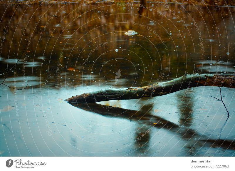 Autumn Natur Pflanze Wasser Herbst schlechtes Wetter Regen Baum Teich dunkel kalt nass natürlich trist weich blau braun gelb rot Gefühle Trauer Tod Einsamkeit
