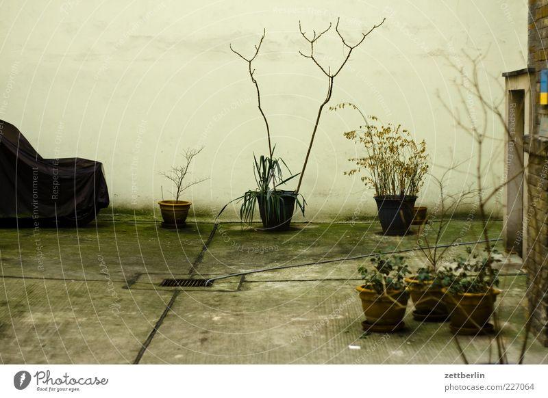 Dschungelcamp - 2200 Natur Pflanze Einsamkeit Herbst Wand Umwelt Gebäude Mauer Fassade warten Klima Sträucher Bauwerk Moos Hinterhof Blumentopf