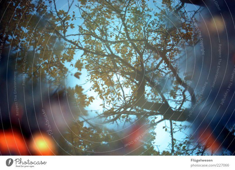it's a beautiful day Himmel Natur Wasser Pflanze Blatt Herbst Wetter Wind Klima Schönes Wetter Warmherzigkeit Baumkrone Herbstlaub Pfütze herbstlich Geäst