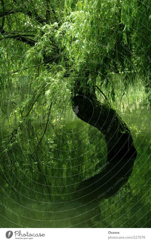 S Baum Wasser See Teich Baumstamm Ast Baumkrone Blatt Reflexion & Spiegelung Wasseroberfläche grün Hochformat Trauerweide Pflanze Textfreiraum unten