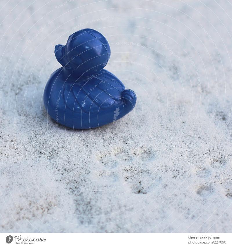 du verrückter vogel, du! blau weiß Winter Schnee Katze lustig verrückt außergewöhnlich Kunststoff Kreativität Fußspur skurril Ente Pfote Surrealismus Fährte