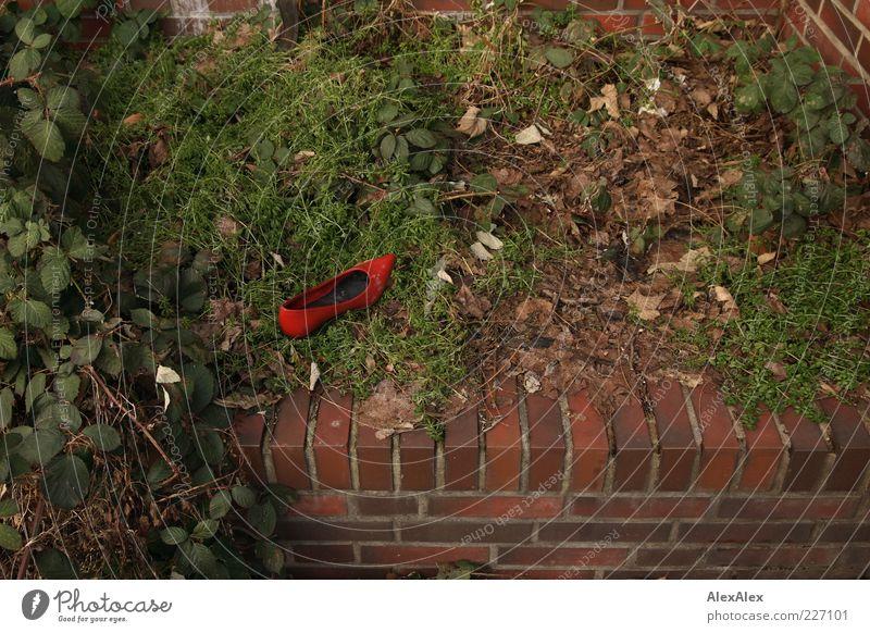 Einzelschicksal grün rot Blatt Einsamkeit Wand Mauer Park Schuhe Bekleidung Sträucher Backstein einzeln Leder verloren verlieren Pflanze