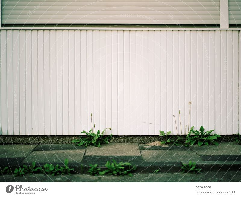 unkraut Natur grün Pflanze Haus Umwelt Gras Stein geschlossen Fassade wild Wachstum Urelemente Blühend vertikal horizontal Bordsteinkante