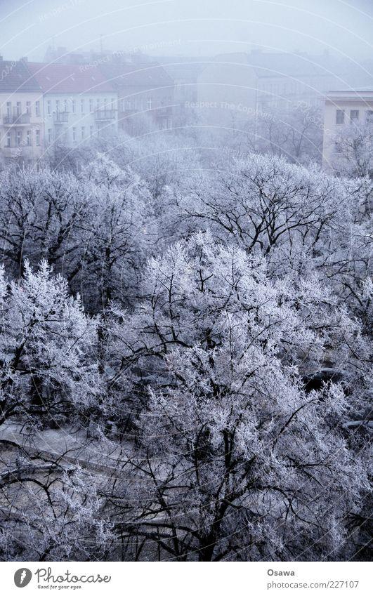 Eisnebel Nebel Wetter kalt Raureif Schnee weiß Baum Ast Baumkrone Stadt Friedrichshain Skyline Gebäude Haus Himmel Winter blau grau dunkel Hochformat