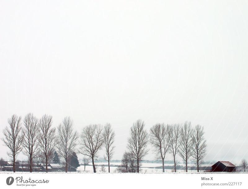Winterlandschaft Landschaft Wolken schlechtes Wetter Nebel Eis Frost Schnee Baum Dorf Menschenleer Hütte kalt trist weiß Allee Einsamkeit Landwirtschaft