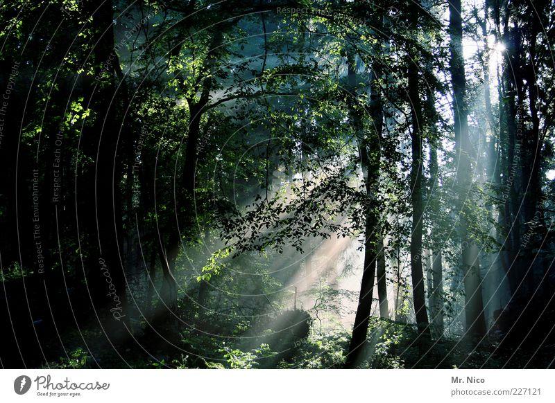 weg des lichts Umwelt Natur Sommer Klima Baum Wald Mischwald Laubwald Märchenwald Holz mystisch friedlich ruhig geheimnisvoll Unterholz Forstwirtschaft Romantik