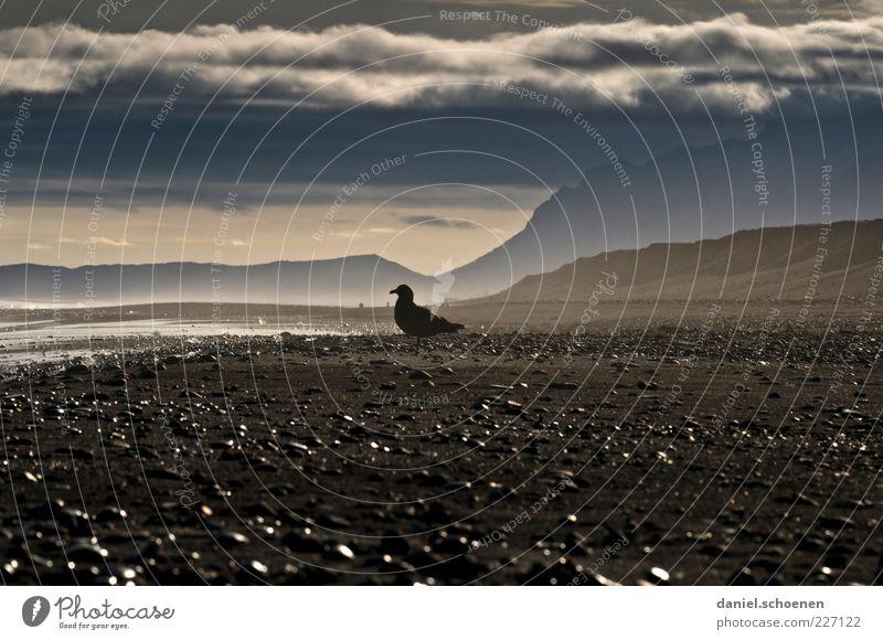 Traumstrand mit Möwe Natur weiß Strand Meer Wolken schwarz Ferne Umwelt Berge u. Gebirge grau Küste Wetter Horizont Klima Island Möwe