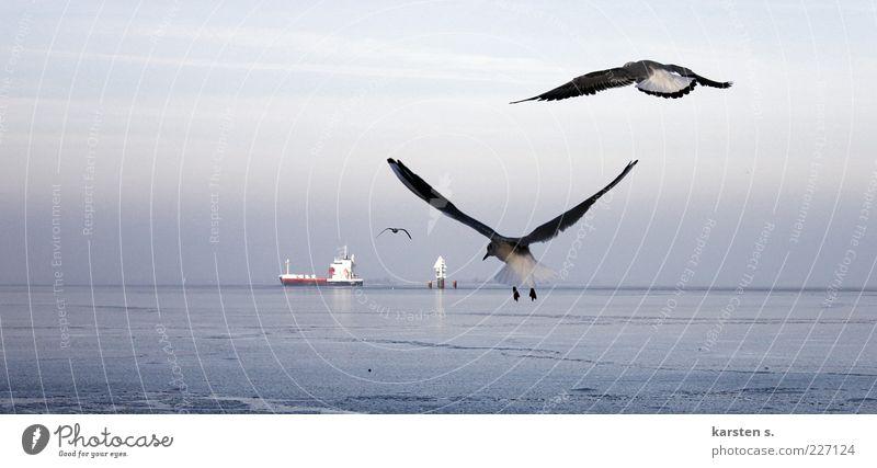 bloß schnell weg.. Wasser Winter Küste Ostsee Schifffahrt Containerschiff Vogel Flügel 3 Tier Tierpaar fliegen frei blau grau beweglich kalt Ferne Außenaufnahme