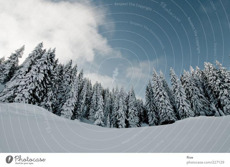 zwei drei bäumchen Skipiste Natur Landschaft Himmel Wolken Winter Wetter Schönes Wetter Eis Frost Schnee Pflanze Baum Wald Hügel Alpen Berge u. Gebirge kalt