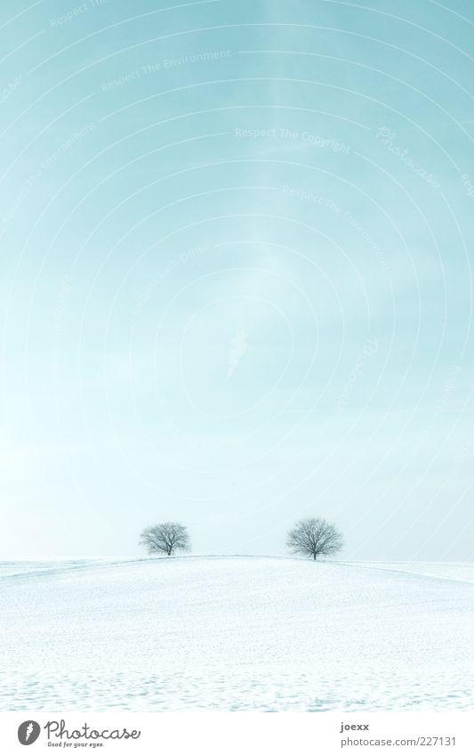 Fernbeziehung Landschaft Himmel Horizont Schönes Wetter Eis Frost Schnee Baum Park Feld Ferne Zusammensein Unendlichkeit blau weiß ruhig Idylle kalt Umwelt