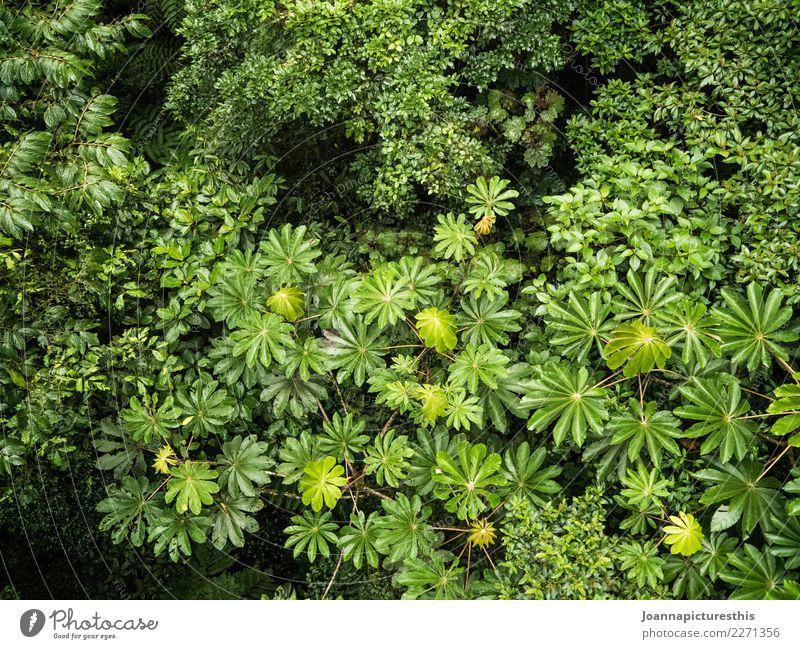 Baumkronen Natur Pflanze Sommer grün Blatt ruhig Wald Umwelt natürlich wild Wachstum Idylle Sträucher nass harmonisch
