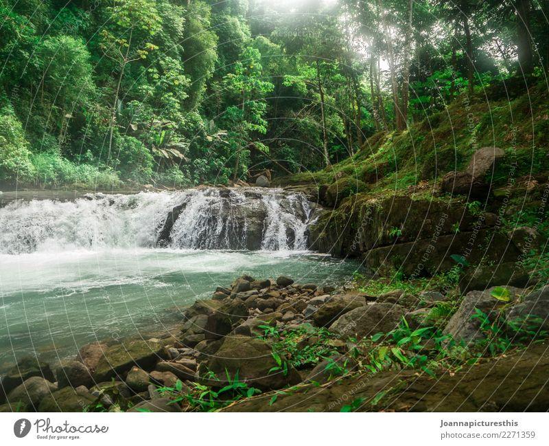 Tropisch Natur Pflanze grün Wasser Landschaft Baum Blatt natürlich Freiheit Felsen Ausflug wild frisch authentisch Abenteuer nass