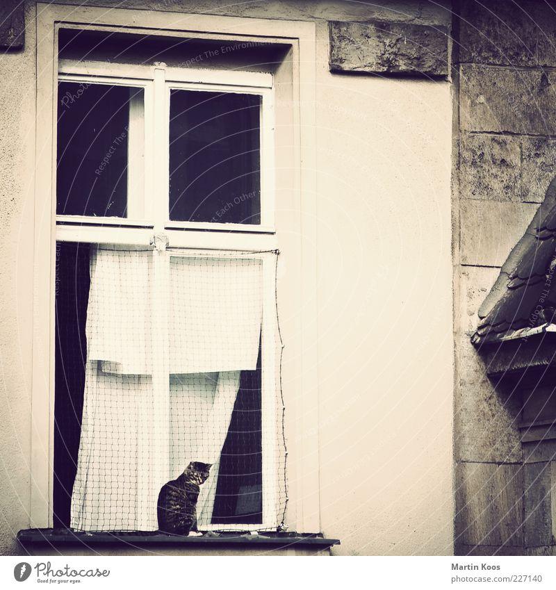 Ausschau alt Einsamkeit Haus Tier Fenster Architektur Traurigkeit Katze warten sitzen Fassade Netz Neugier beobachten Sehnsucht geheimnisvoll