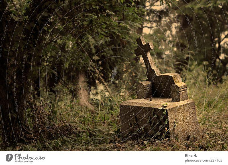 Vergessen II Sommer Efeu Traurigkeit trist grün Glaube demütig Einsamkeit Tod Trauer Verfall Vergangenheit Vergänglichkeit Friedhof Grab Grabstein Kreuz