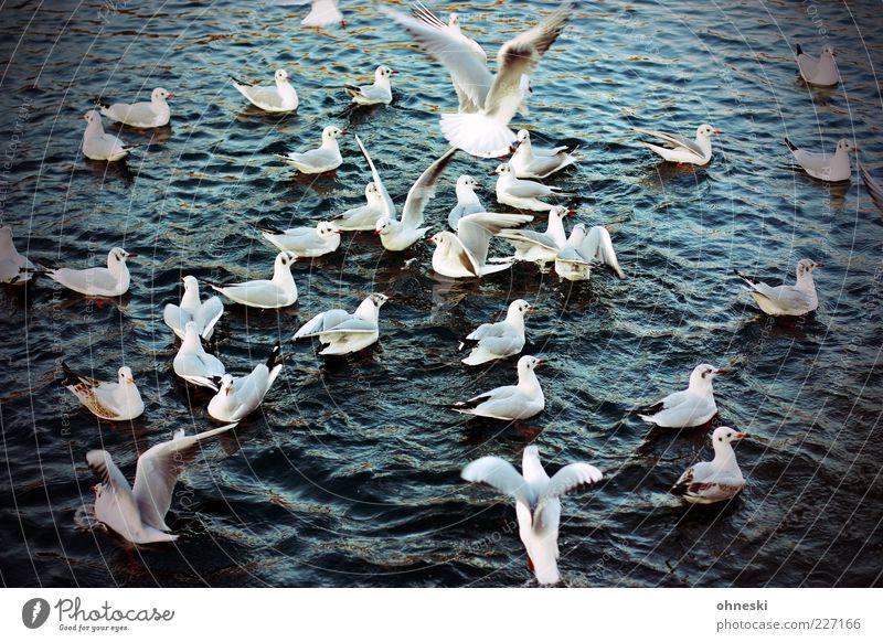 Platz da! Tier Wasser Wildtier Vogel Möwe Tiergruppe fliegen füttern Fressen Farbfoto Außenaufnahme Vogelperspektive Im Wasser treiben Schwimmen & Baden