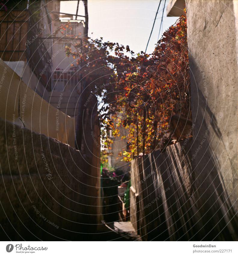 durch die gassen Natur alt Stadt Pflanze Blume Haus Umwelt dunkel Wand Mauer außergewöhnlich Fassade Treppe Armut frei authentisch