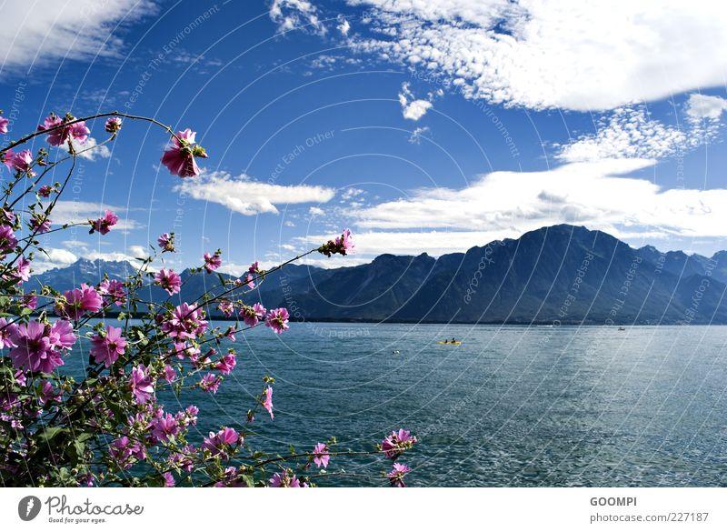 Lac Léman Sommer Natur Wasser Himmel Wolken Sonne Schönes Wetter Pflanze Blüte Hügel Berge u. Gebirge See Montreux blau rosa Zufriedenheit Erholung Farbfoto Tag