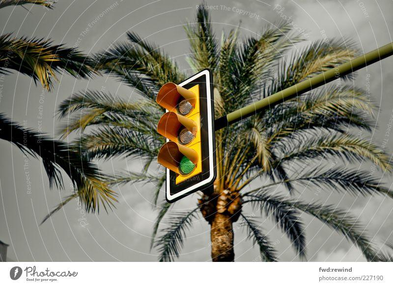 Donnerwetter grün Baum Sommer dunkel Wärme Wetter Beginn Insel Klima Zukunft Wandel & Veränderung bedrohlich Unendlichkeit Unwetter Stress Palme