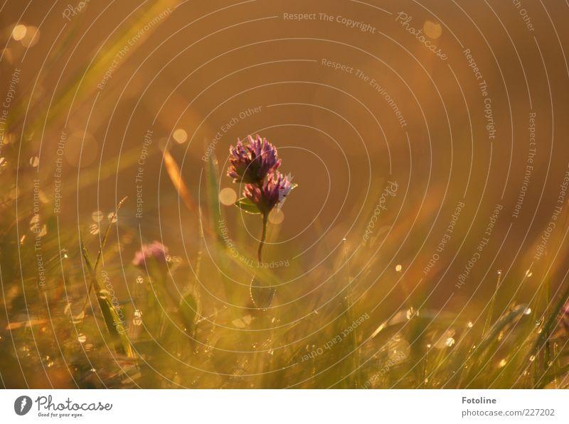400 wundervolle Momente Umwelt Natur Pflanze Urelemente Wasser Wassertropfen Sommer Blume Gras Blatt Blüte Wildpflanze Garten Park Wiese Duft hell nass