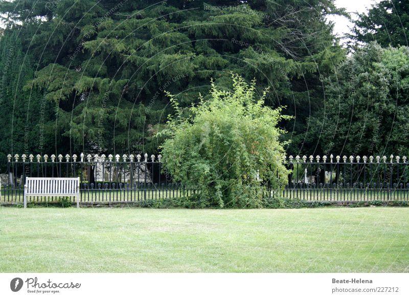 Rasen frisch gemäht Natur weiß grün Baum Sommer ruhig Erholung Wiese Landschaft Garten Park sitzen ästhetisch Sträucher rein