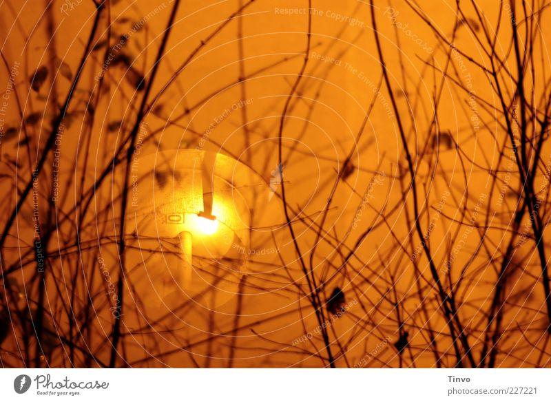 lichterloh 2 orange Beleuchtung gold Sträucher außergewöhnlich leuchten Straßenbeleuchtung Zweige u. Äste Nacht Außenbeleuchtung