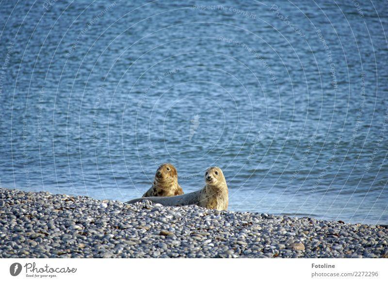 Pure Neugier Umwelt Natur Landschaft Tier Urelemente Erde Wasser Winter Schönes Wetter Küste Strand Nordsee Meer Insel Wildtier Fell 2 Tierpaar hell maritim