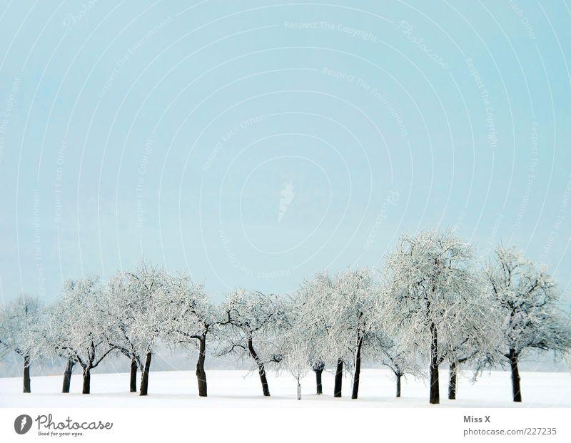 Schneetag Natur Wolkenloser Himmel Winter Schönes Wetter Eis Frost Baum kalt weiß Schneelandschaft Landschaft Schneedecke Farbfoto mehrfarbig Außenaufnahme