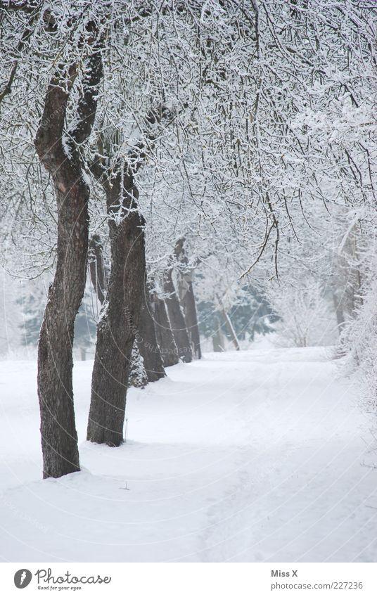 Obstwiese Natur weiß Baum Winter kalt Schnee Park Eis Frost Reihe Allee Raureif Winterstimmung Baumreihe Gartenweg