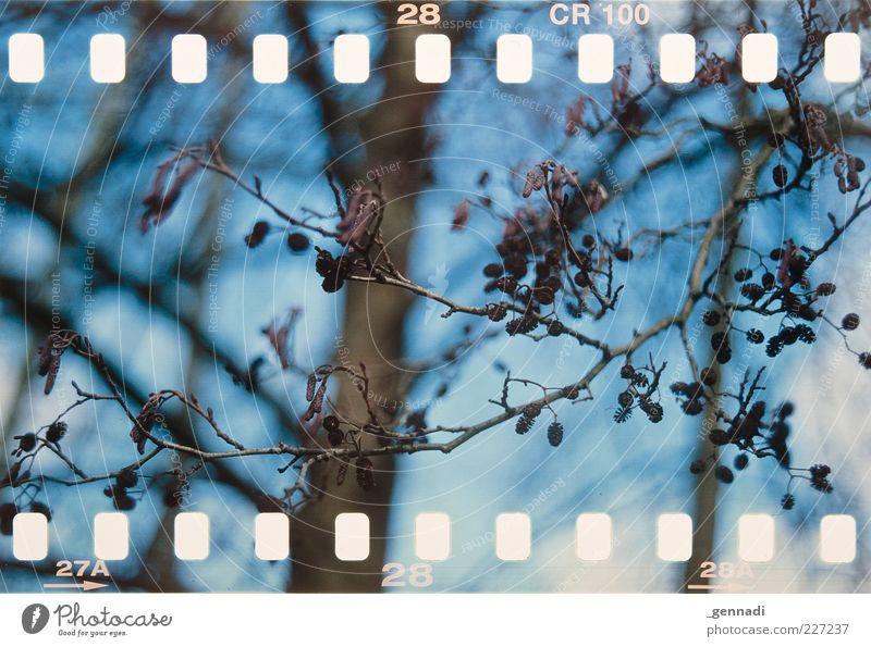 0 0 0 0 0 0 0 0 0 0 0 0 0 0 0 0 0 0 Umwelt Natur Pflanze Luft Himmel Frühling Schönes Wetter Baum Wachstum ästhetisch authentisch einzigartig blau braun schön