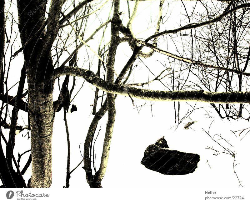 Pianezza Baum Winter Wald Bergwald